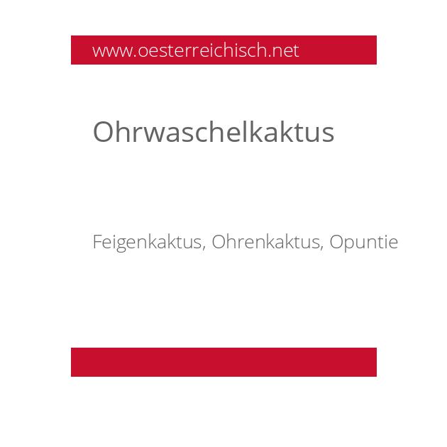Ohrwaschelkaktus